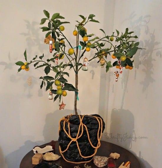 satsuma-orange-christmas-tree