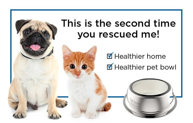 Join the New 32-Ounce Kinn Kleanbowl Indiegogo Campaign for Healthier Pets!