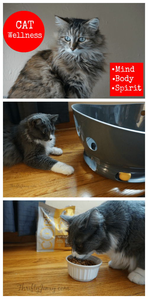 Cat Wellness - Keeping Our Furry Friends Healthy in Mind, Body and Spirit