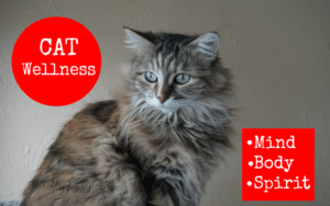 Cat Wellness – Keeping Our Furry Friends Healthy in Mind, Body and Spirit
