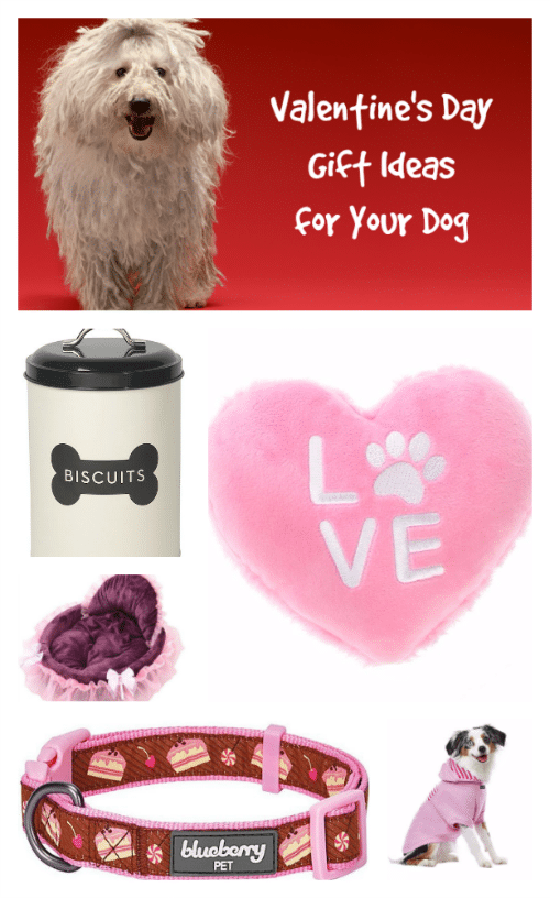 Valentineu0027s Day Gift Ideas For Your Dog
