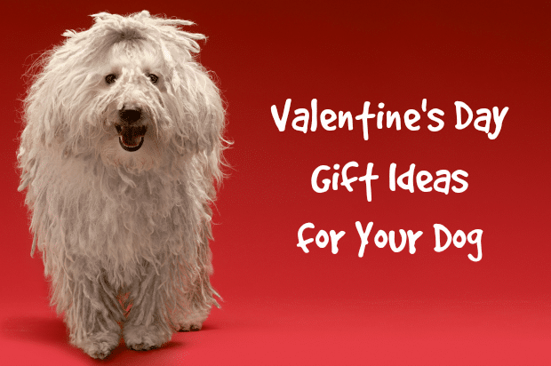Homemade Dog Treats Recipe Perfect for Valentine's Day
