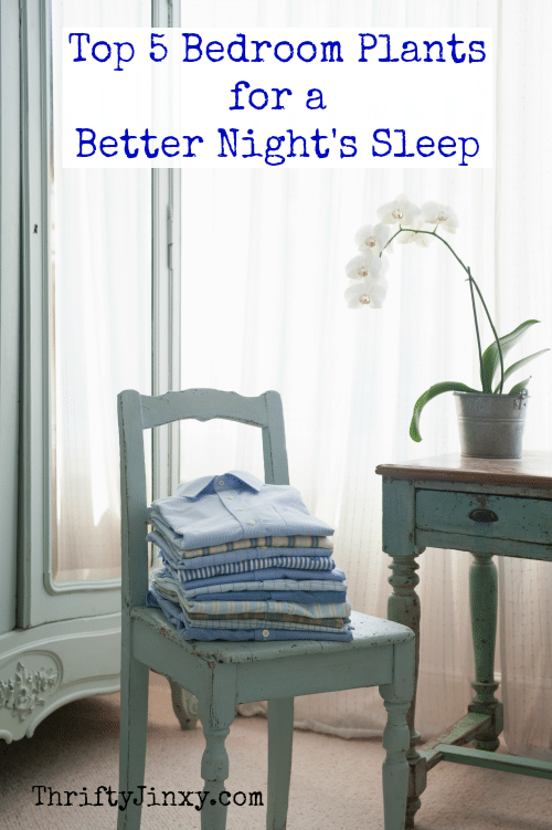 Top 5 Bedroom Plants for a Better Nights Sleep