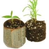 Make Newspaper Plant Pots – Start Seedlings the Earth-Friendly Way