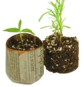 Make Newspaper Plant Pots – Start Seedlings the Earth-Friendly Way
