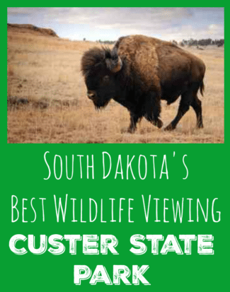 Custer State Park Wildlife