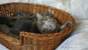 5 Ways to Celebrate Your Cat's Adoption Anniversary