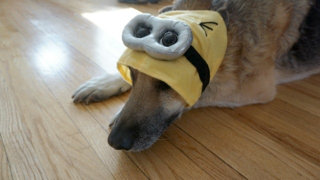 Minion Pet Costume Dog