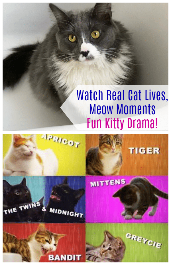 Watch Real Cat Lives, Meow Moments – Fun Kitty Drama!