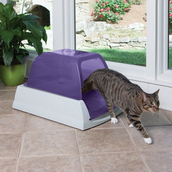 scoop free litter box covered