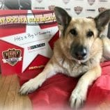 Share Why YOUR Dog is a Star and Help the Mutt-i-Grees Program