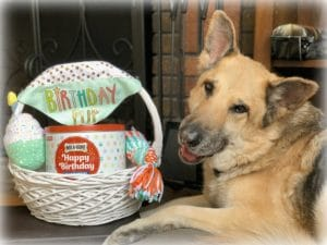 Make Your Dog's Birthday Celebration Special