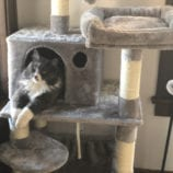 How to Choose a Cat Tree