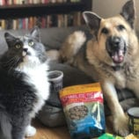 New Treats for Pets – Show Your Love!