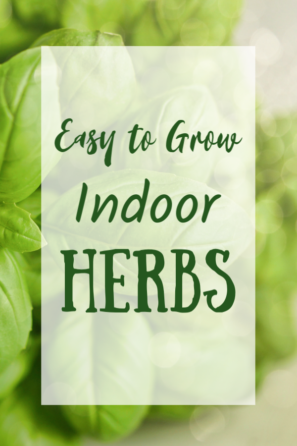 Easy to Grow Indoor Herbs