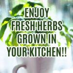 Enjoy an Herb Garden