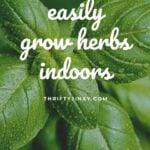easy to grow inside herbs