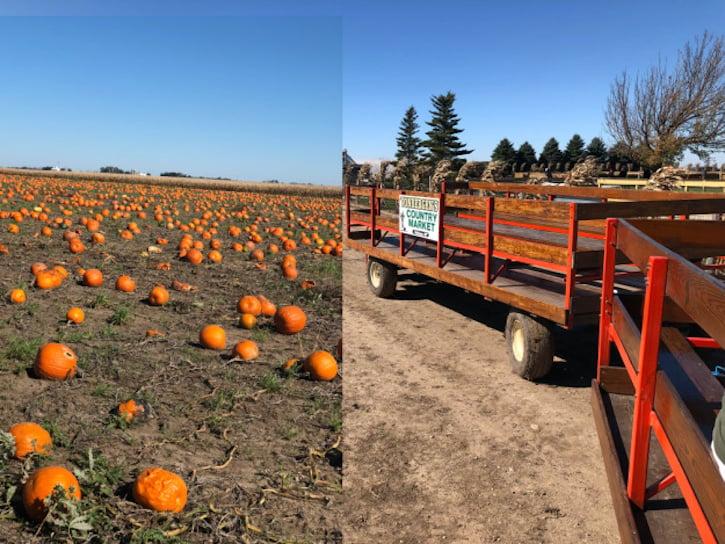 Pumpkin Tractor Ride