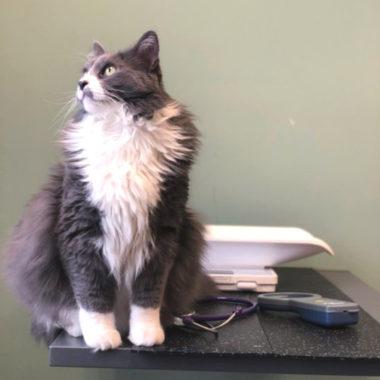 cat at veterinarian office