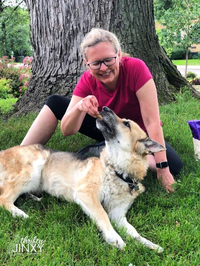 Woman feeding treat to German Shepherd Dog