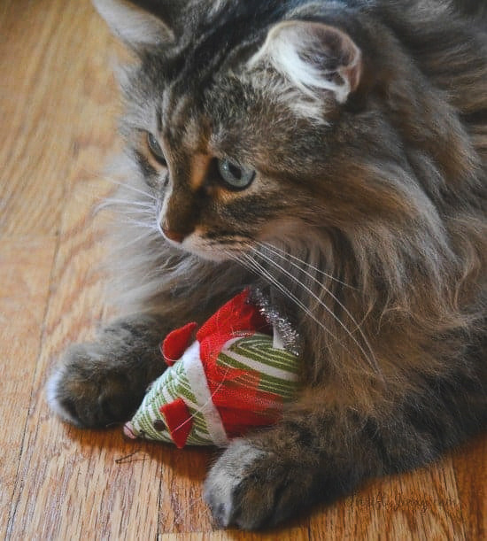 Cat with toy Christmas Mouse