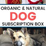 ORGANIC AND NATURAL DOG SUBSCRIPTION BOX FROM WAGWELL